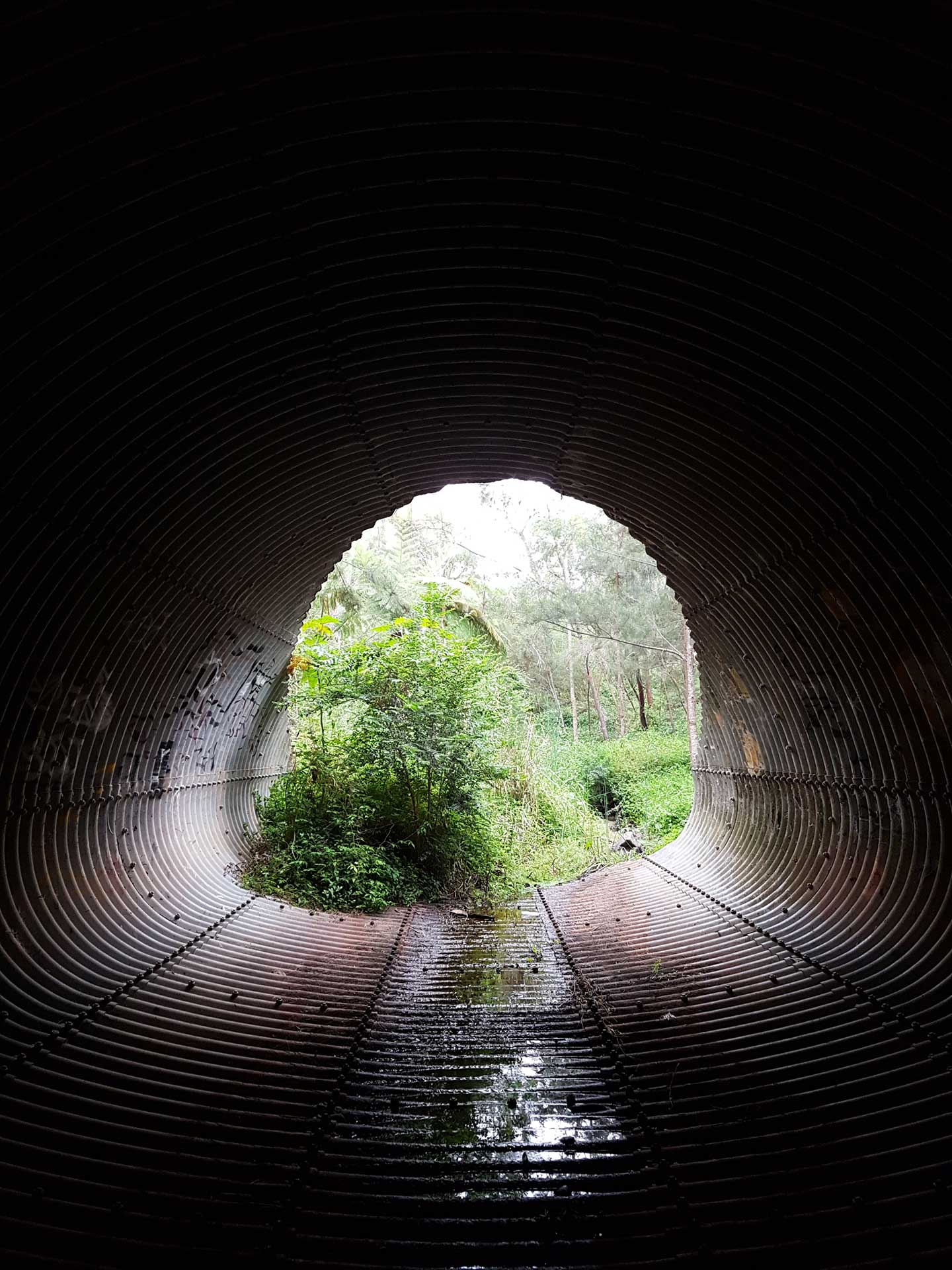 First Place - Laura Payne (Title: Forest Tunnel)